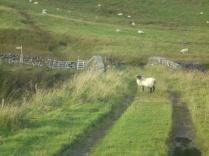 Scotland 2013 ELEVEN 084