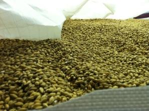 Malted Barley, Edradour Distillery