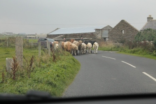 3 Driving on Orkney (20)